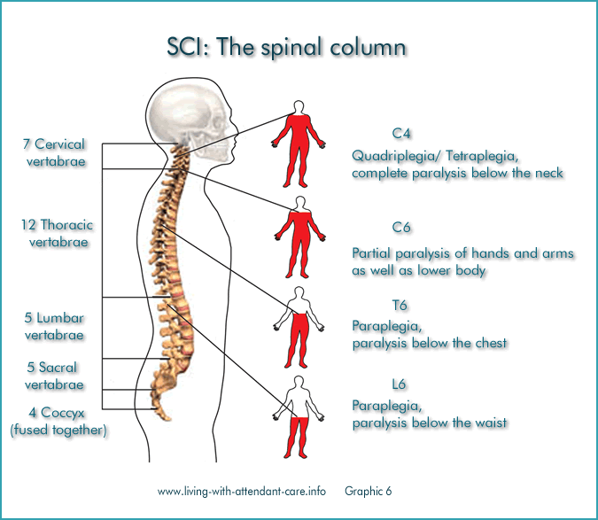 What Research Is Being Done To Treat Spinal Cord Injuries
